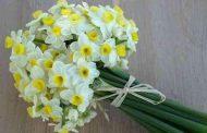بوییدن گل_نرگس کلید درمان افسردگی است.