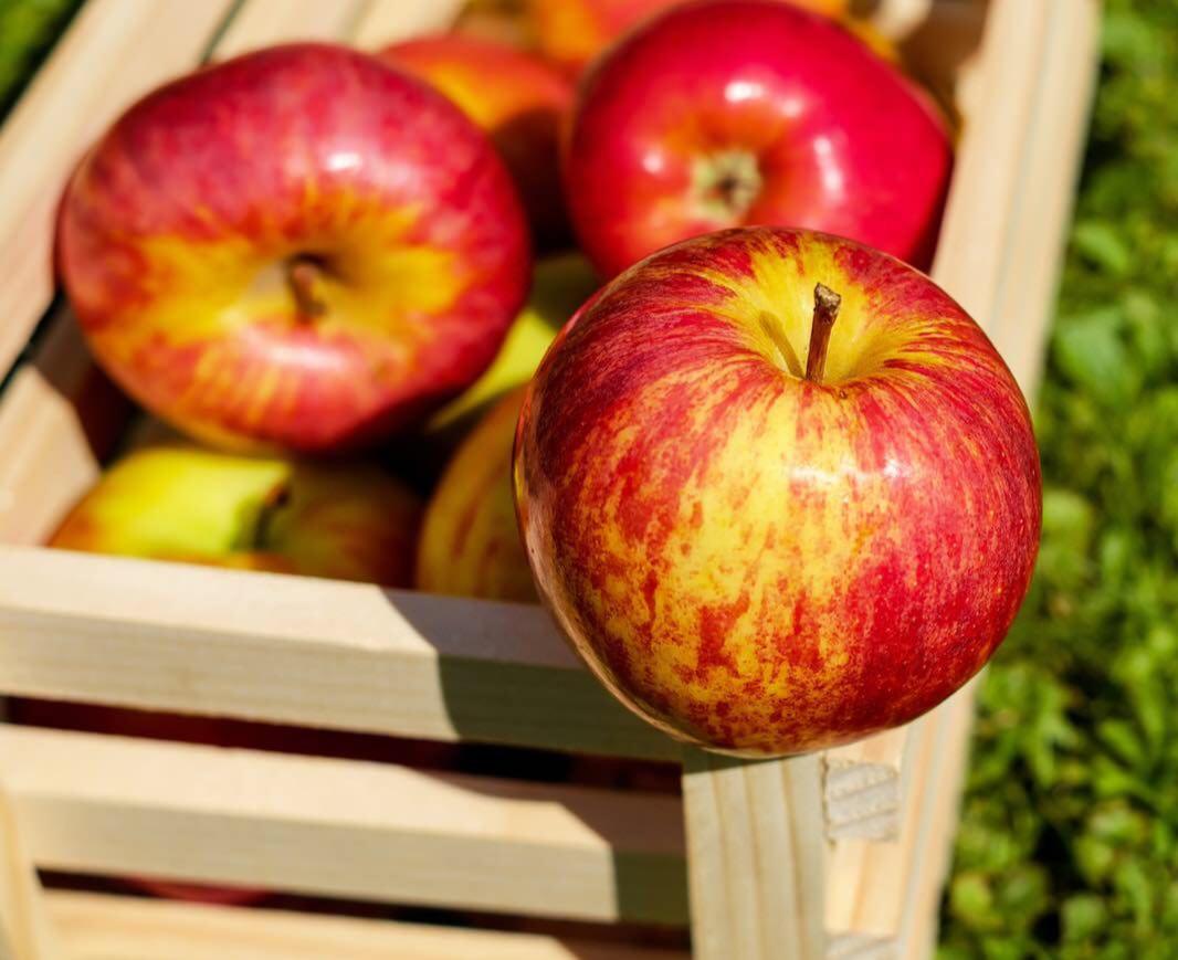 سیب بخورید !
